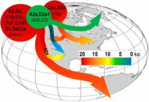 Reconciling migration models to the Americas with the variation of North American native mitogenomes
