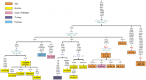 Complete Mitochondrial DNA Diversity in Iranians