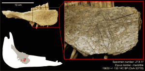 Earliest Human Presence in North America Dated to the Last Glacial Maximum: New Radiocarbon Dates from Bluefish Caves, Canada
