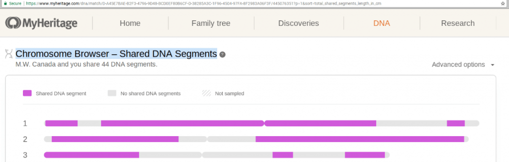 MyHeritage Chromosome Browser